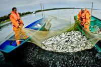 Чтобы повысить улов, надо навести порядок в законодательстве.