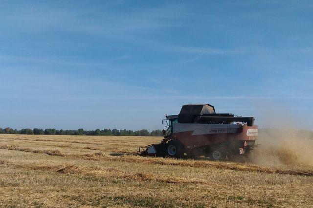 В регионе обмолочено 2 млн 560 тысяч тонн зерна.
