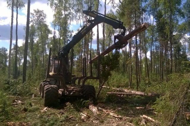 Рабочие находились на лесной делянке.