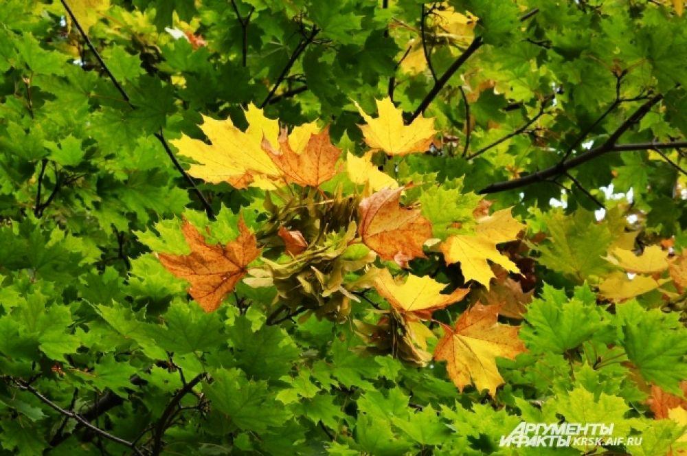 Лето с осенью смешалось.