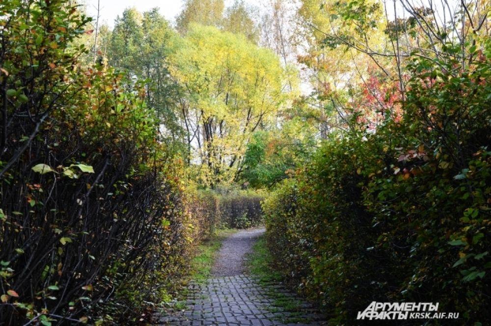 Осенняя аллея. Очаровательное место для прогулок.