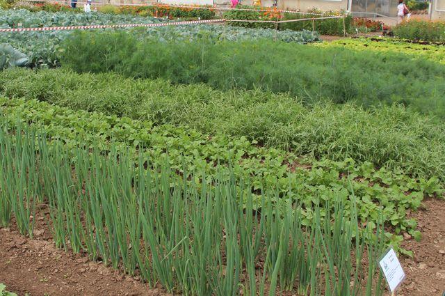 Образцовый огород