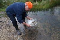 Самородки можно искать в верховьях ручьёв и рек.
