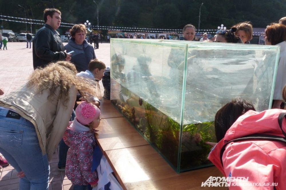 Не оставил равнодушными горожан открытый аквариум с морскими звездами, ежами, крабами, актиниями и многими другими.