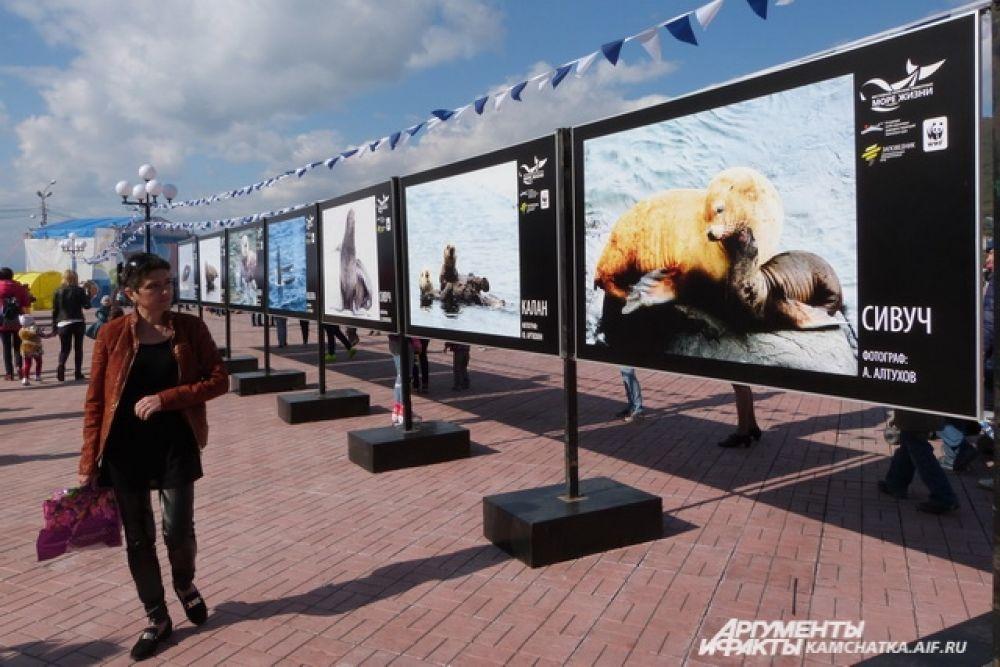 В центре города работала фотовыставка с редчайшими кадрами морских обитателей.