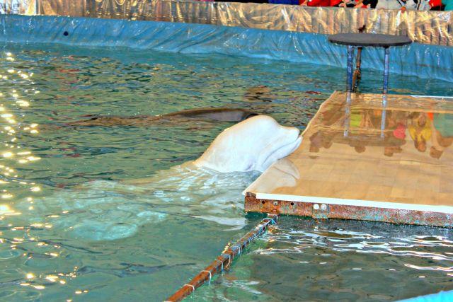 Дельфинарий вЯлте могут закрыть из-за просроченного корма