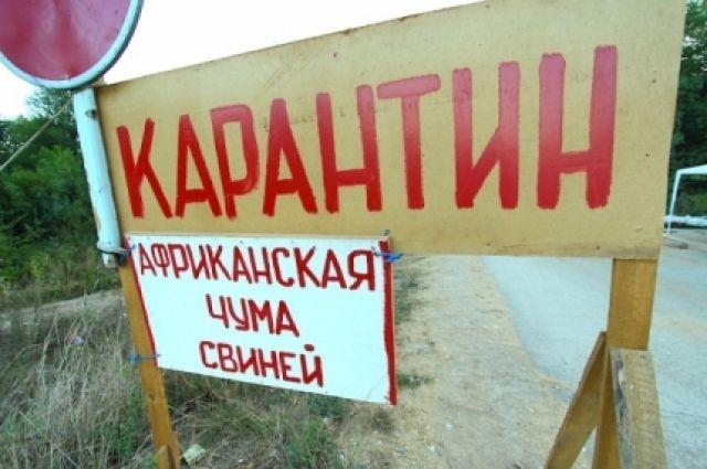 Рядом сКировской областью зафиксирован очаг африканской чумы