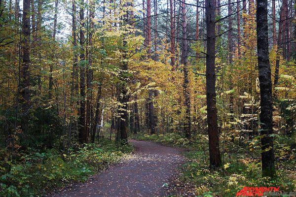 К сожалению, в ближайшее время в Пермский край вернётся осенняя прохлада, температура воздуха будет постепенно понижаться.