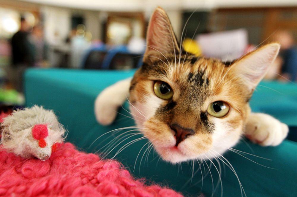 Кошки - самые любопытные существа в мире. Сразу после человека.