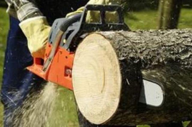 Упавшее дерево вРостове придавило собой две припаркованные машины