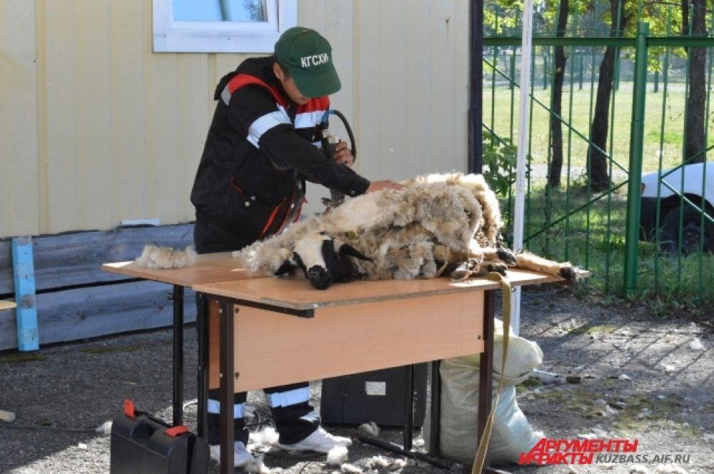 Например, в мастер-классе по стрижке баранов.