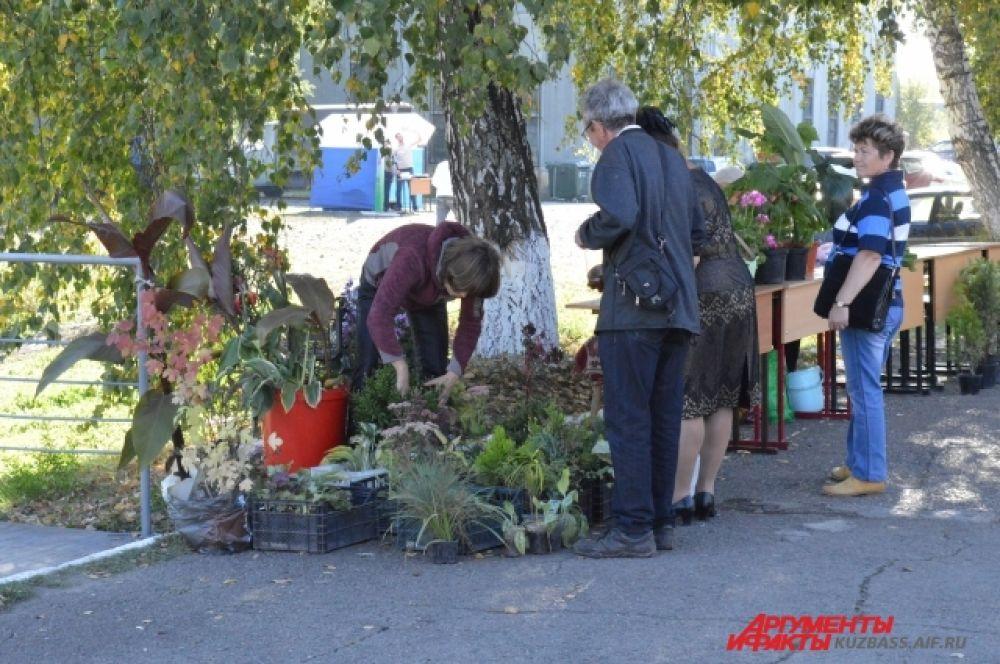 Были представлены саженцы различных растений.
