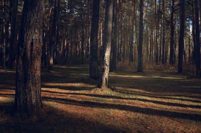 Тольяттинские cотрудники экстренных служб отыскали пропавшего влесу грибника мертвым