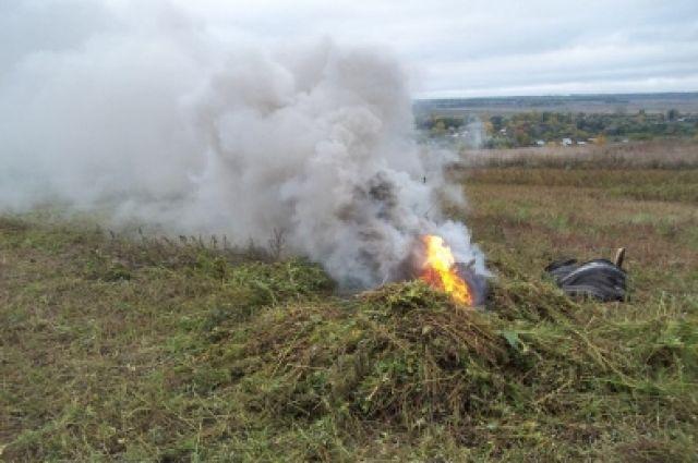 ВВоронежской области полицейские сожгли около 750 килограммов конопли