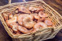 Рецепт вкусных лисичек
