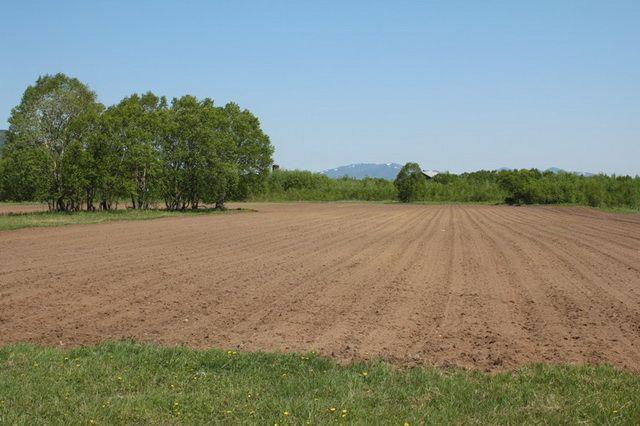 Получить «дальневосточный гектар» вХабаровском крае можно за16 дней