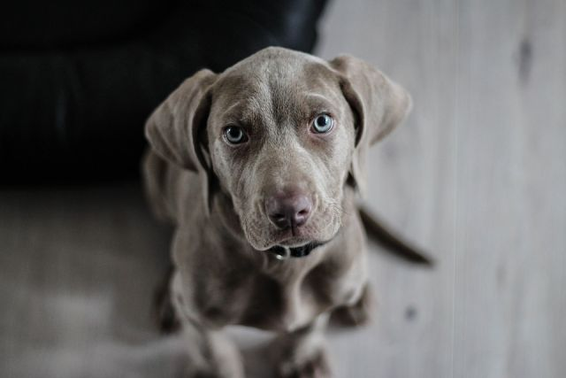 Суд вынес вердикт жителю Кировской области, утопившему собаку