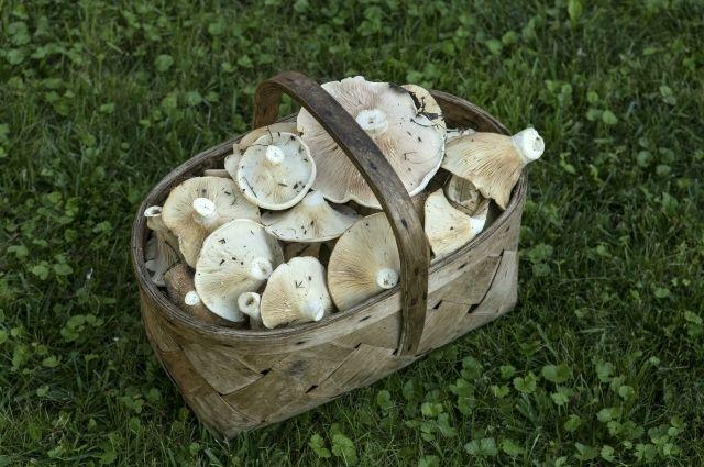 ВВоронежской области ототравления грибами скончался полуторагодовалый сын