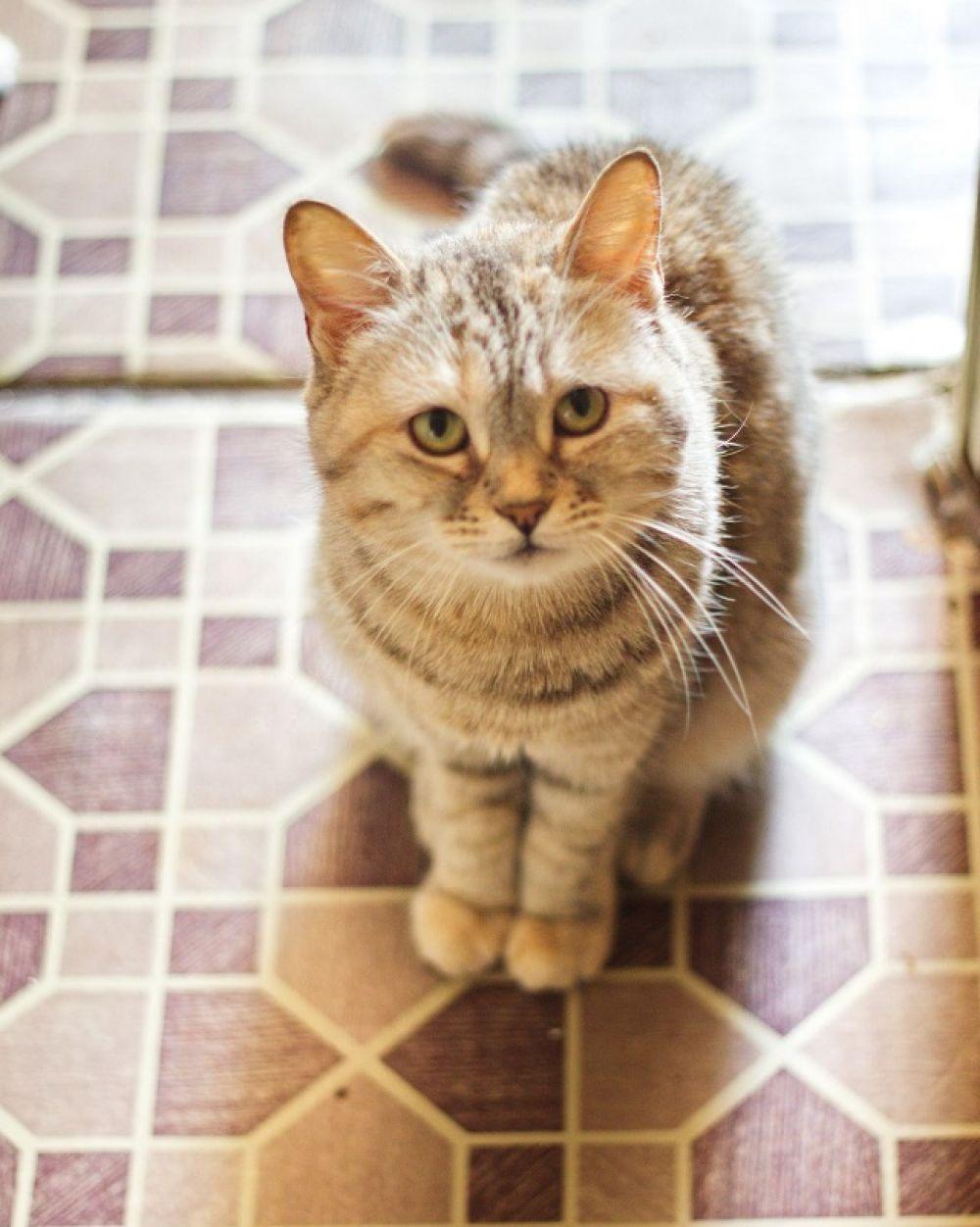 Мини. Три года, к лотку приучена, отдается в квартиру без других кошек. Спокойное животное с ненавязчивым характером.