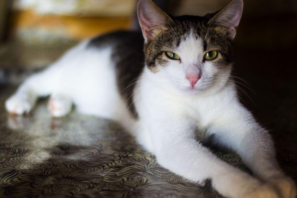 Малышка. Один год, лоток знает отлично, приучена к сухому корму. Ненавязчивая тихая кошка.