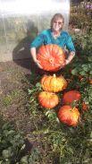 Вот такие тыквы выросли в Мичуринском в коллективном саду № 10 в Кунгуре, вес самой большой тыквы 21,6 кг, обхват 1,5 м, высота 0,25 м. Очень переживали, что из-за наводнения ничего не вырастет (вода на участке стояла 3 недели), но, как оказалось, зря.