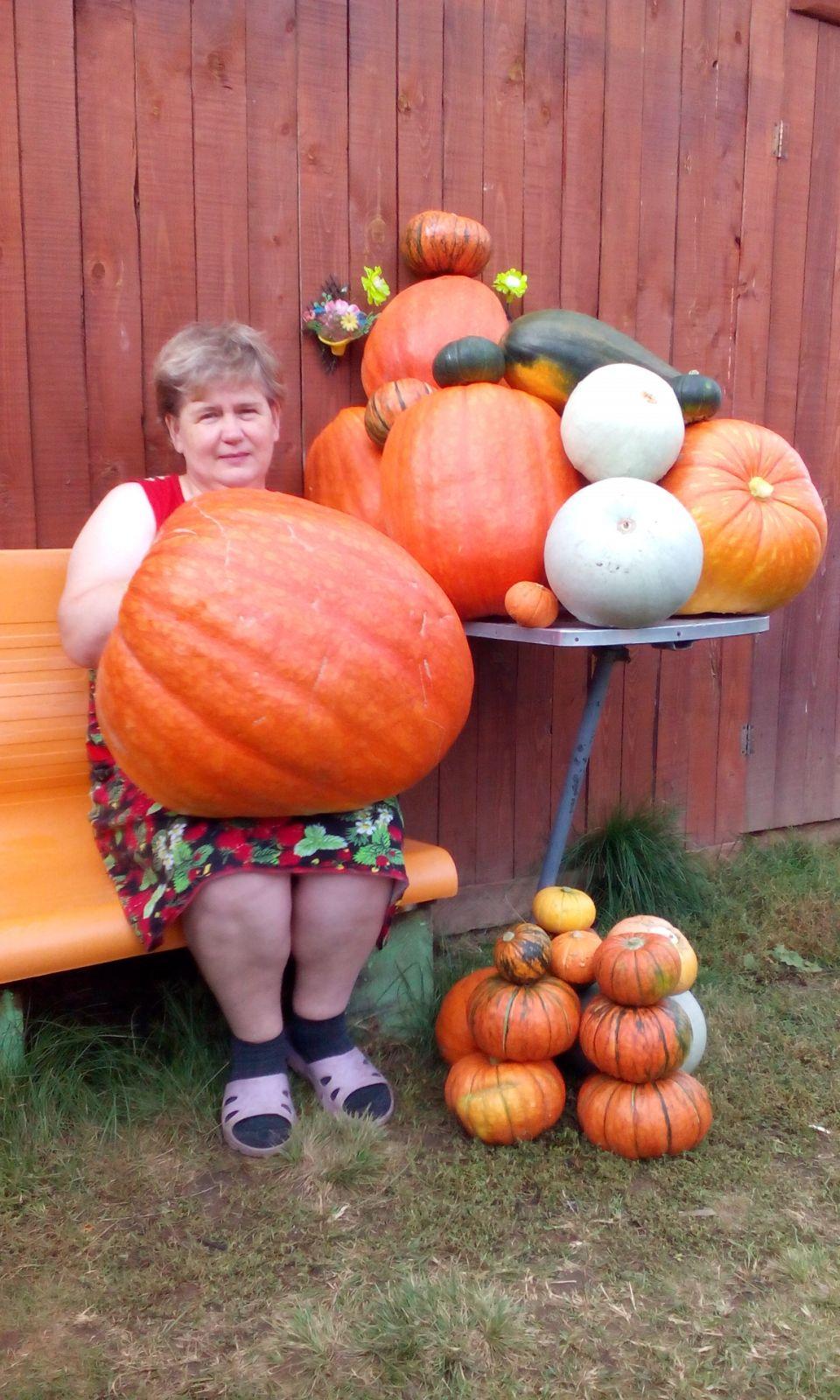 Я, Чернышова Людмила, вырастила такие тыквы. Даже подумать не могли, что такие нарастут. Самая большая весом 26 кг, остальные по 20 и меньше.