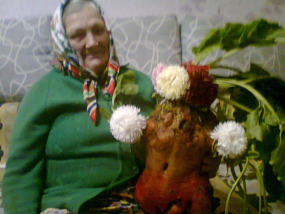Зоя Павловна нежно называет свой урожай «свеколочка-чудо наше»!
