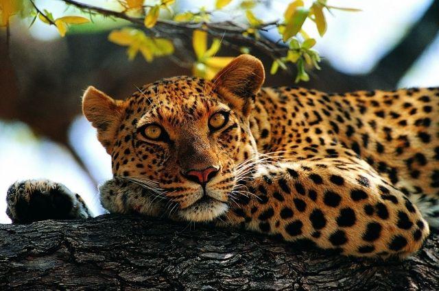 Измариупольского зоопарка убежал леопард