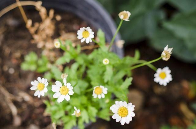 Зимой комнатным растениям не хватает солнечного света.