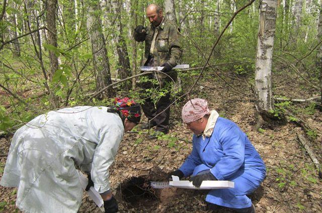 ВКировской области в 3-й раз разложат влесах вакцину отбешенства