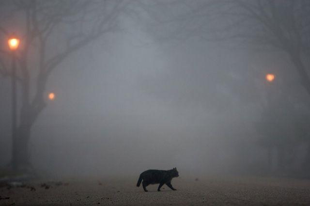 Сильный туман накроет Нижегородскую область 3