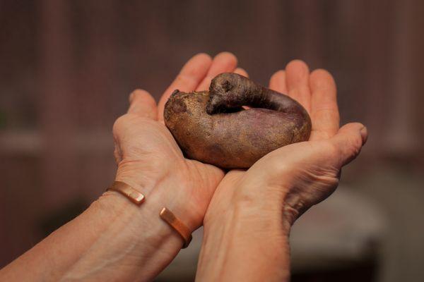 «В моем огороде на станции Бородулино в Верещагинском районе созрела интересного вида свёкла. Обычно она бывает в форме цилиндра, поэтому сорт и называется