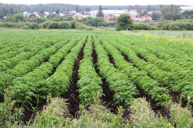На этой благодатной земле найдётся место для всего: и для ухоженных фермерских полей, и для промышленного пейзажа с объектами ГОКа.