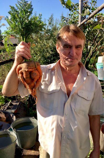 Вот такое чудо-юдо морковное выросло на грядке у Александра и Маргариты Никандровых в селе Калинино