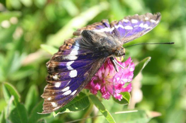 Омичи смогут увидеть редкие виды насекомых.