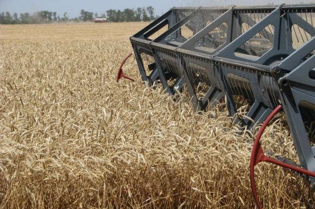 Самая высокая урожайность - в Ордынском районе