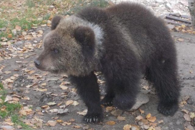 Медведице 10 месяцев.