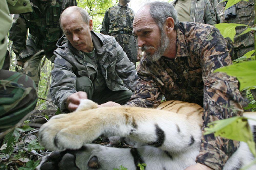Защитник животных. В августе 2008 года глава правительства РФ посетил Уссурийский заповедник дальневосточного отделения РАН, где собственноручно надел спутниковый ошейник с GPS-передатчиком пятилетней тигрице, пойманной учеными.