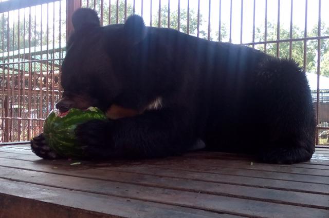 Такая ягода и медведю нравится