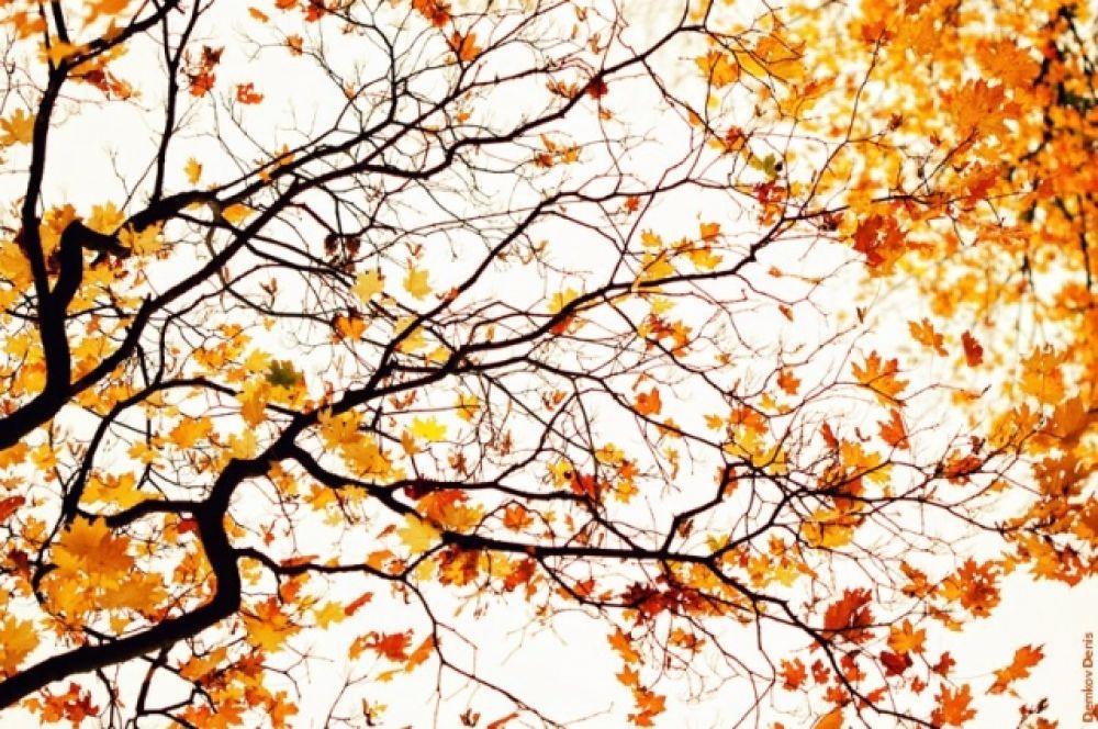 Сколько будет рваться листва, осень вечно права.