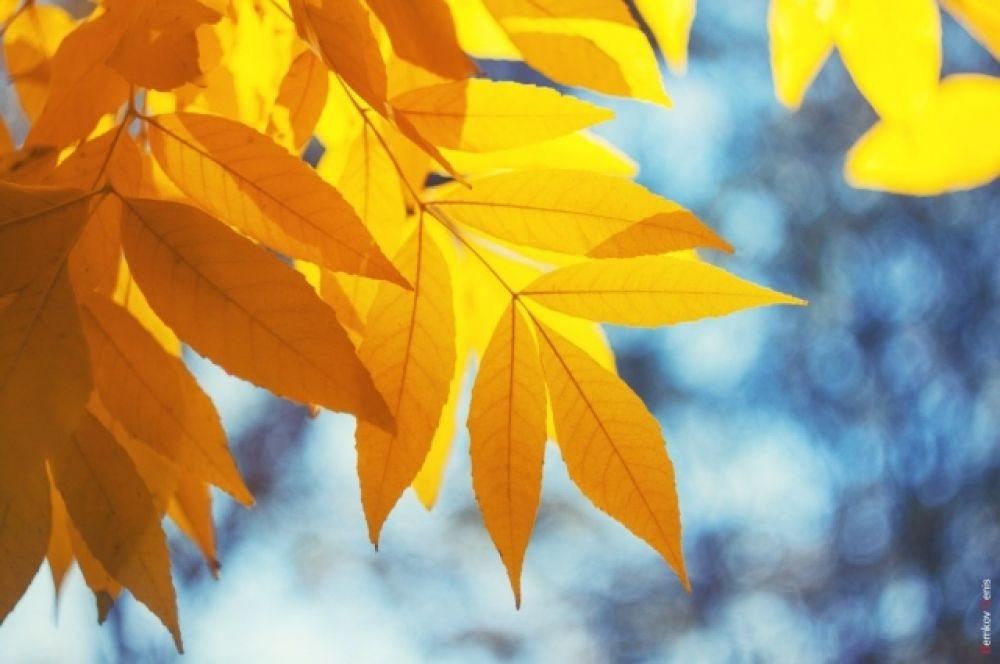 Каждый листок - как маленькое солнце и напоминание об ушедшем лете.