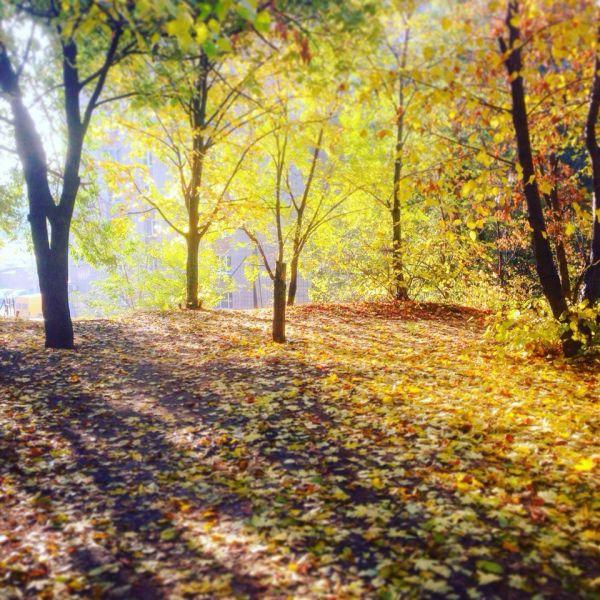 В багрец и золото одетые леса...