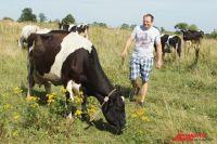 Фермер Степан Козаченко свои коров холит и лелеет.