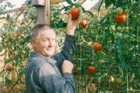Владимир Колбин за сезон собирает по несколько урожаев огурцов и помидоров