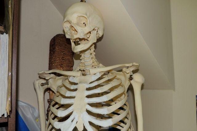 Человеческий скелет отыскали натерритории Покровской клиники