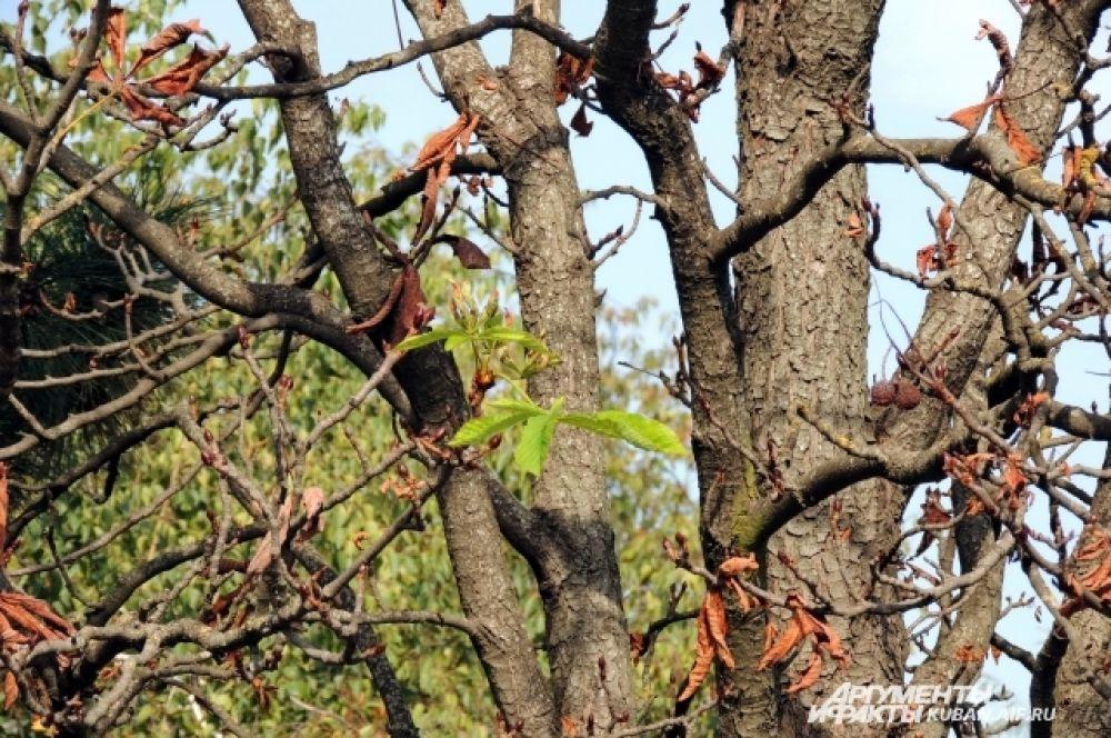 На некоторых деревьях в Чистяковской роще листья уже опали.