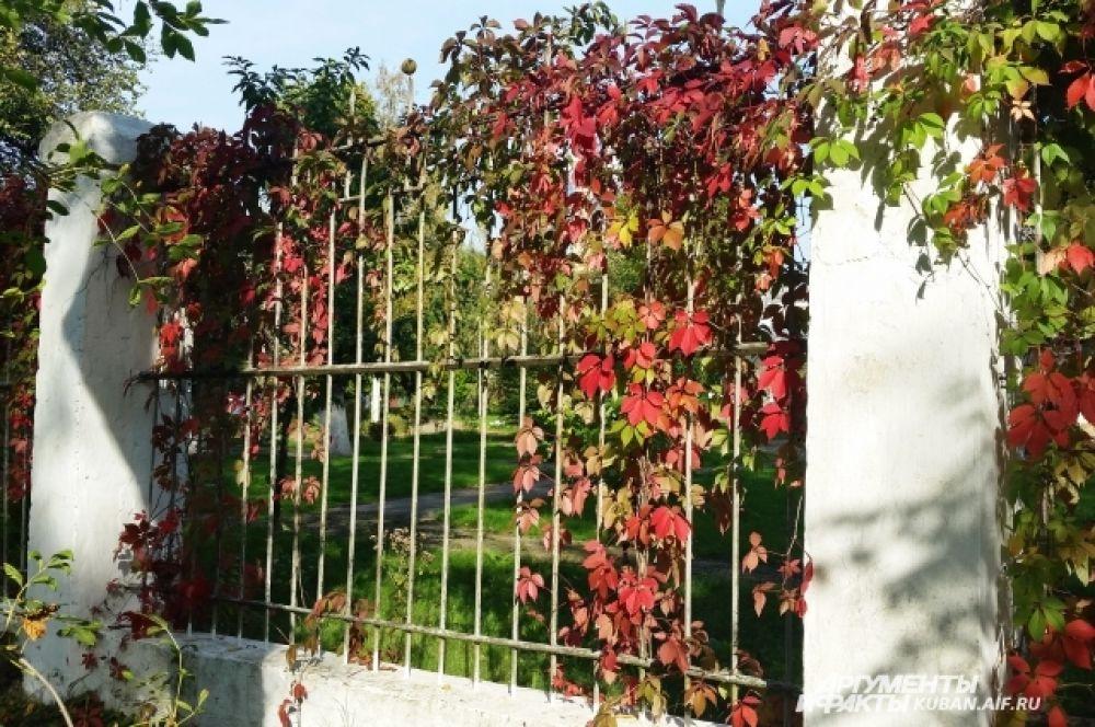 Кто сказал, что осенние листья обязательно должны быть желтыми?