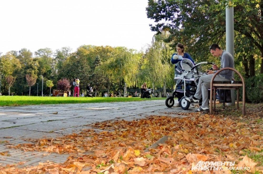 Желтых листьев в Чистяковской роще пока относительно немного и они контрастируют с еще зелеными деревьями.