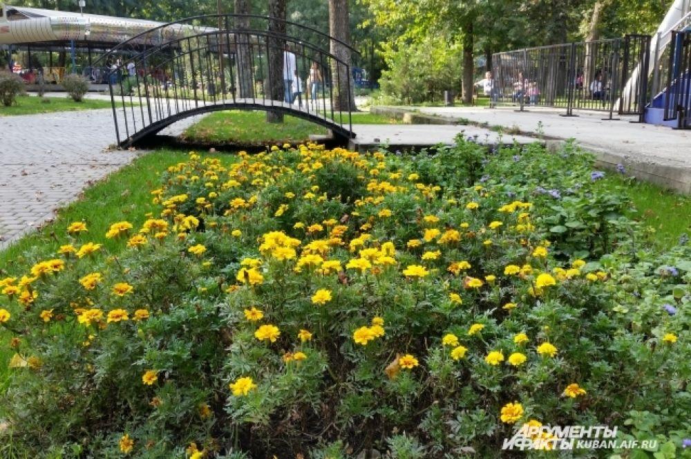 В Чистяковской роще по-прежнему много цветов.