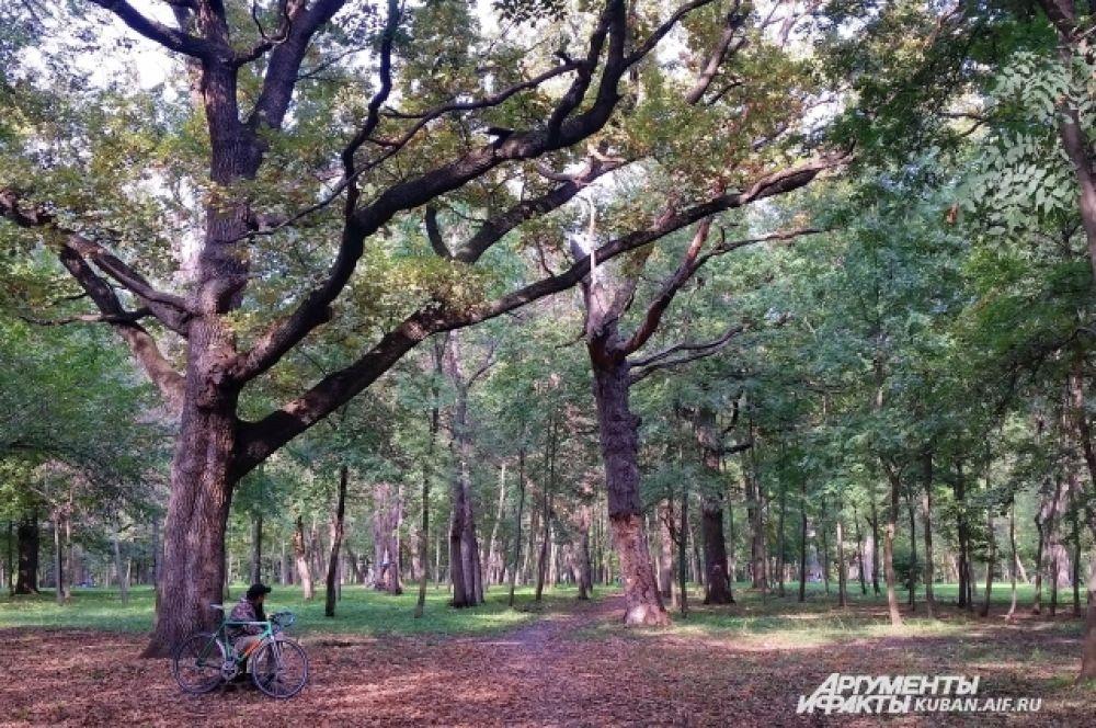 В некоторых местах Чистяковская роща напоминает лес.